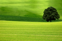 Fotolia_Arbre champ vert.jpg